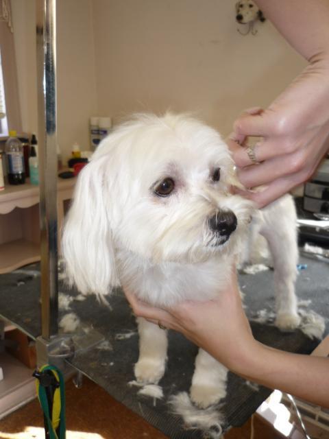 Terri S Dog Styling Davenport Ia