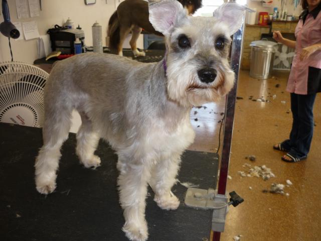 Terri S Dog Grooming Davenport